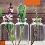 Aperfeiçoamento em Aromaterapia Científica: Centro de formação Ciranda dos Aromas – Turma 2